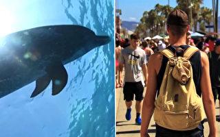 男子接受前生回溯催眠 發現前生竟是海豚