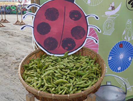 毛豆是黃、黑豆的前身,目前美濃復耕的大豆品種在70天左右採收可當毛豆食用。(方金媛/大紀元)