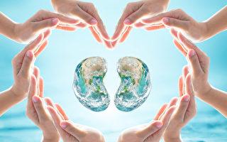 中医认为,肾是生命之根,先天之本。(Chinnapong/Shutterstock)