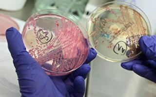 世界衛生組織2月27日發布對人類最危險的12種細菌清單。(Sean Gallup/Getty Images)