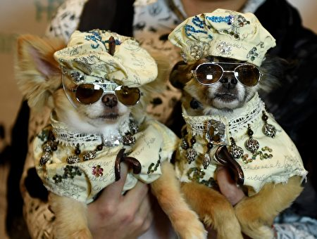 US-FASHION-ANIMAL-PETS