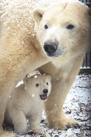 FRANCE-ZOO-POLAR-BEAR