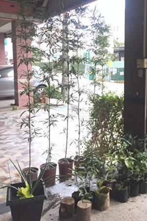 店門口的綠籬與盆栽也相當吸引客人的眼光。(李芳如/大紀元)