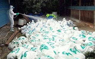 禽流感威脅未解除 台多縣市傳出疫情