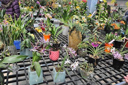 这些漂亮盆栽的花盆、土让和仿造石头、木头等都是由回收废玻璃制成。(赖月贵/大纪元)