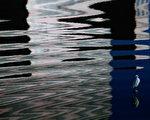 吳文鏡攝影展以《白鷺鷥和夜鷺》及《彈塗魚》為攝影主題。(桃市文化局/提供)