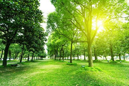 专家称,树木不会直接吃肉,但它们会取得来自动物尸体的养分。从这方面来看,树木并非素食者。(Fotolia)