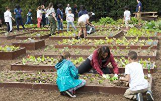 美国第一夫人梅兰妮亚宣布,将会继续照料前第一夫人蜜雪儿精心经营年的白宫厨房菜园。图为蜜雪儿带领儿童在厨房菜园劳作。 (SAUL LOEB/AFP/Getty Images)