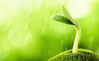 雨水節氣來臨時,應多吃豆類和早春的綠葉菜。這時也是養肝護肝、減肥瘦身的好時節。(公有領域)