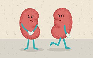 避免腎衰竭、長期靠洗腎度日,就要在腎臟病露出端倪的時候,儘快保養、治療。(Shutterstock)