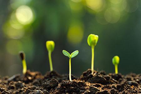 好根底最素朴、也最敦厚,总是默默的支援与扶持,增添正思维、正能量,教人镇静坚定、全力以赴。(shutterstock)