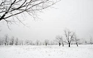 詩歌:第二場雪