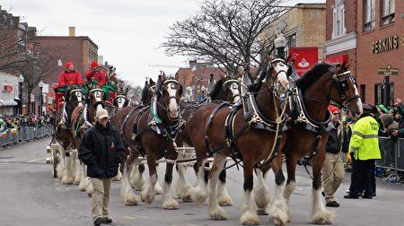 波士顿圣派翠克节游行马队。(贝拉/大纪元)