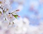 春到了。(fotolia)