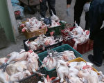 雲林縣7日查獲違法屠宰雞隻131隻,除了全數沒入銷毀外,並依違反畜牧法對雞販加重裁處。(縣府提供