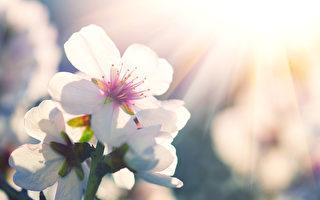 春天开花。(fotolia)