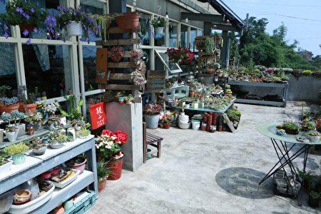 厝尾頂手作坊屋頂平台的花卉。(曾漢東/大紀元)