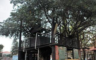 大溪區中興國小的校門巨大的深色樹屋。(桃園環保局/提供)