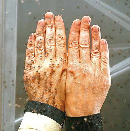 驱蚊剂实验对照图。(Skin Technology提供)