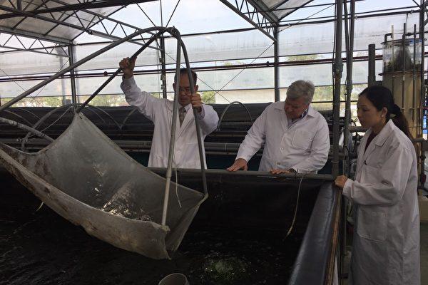 嘉年華郵輪集團「公主遊輪」物流副總裁Mr. Eugene Marino參觀高雄在地優質農漁產品產地。(高市海洋局提供)