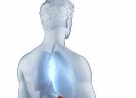 腎臟位置解剖後視圖(Fotolia)