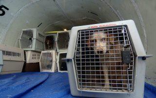 用狗當「毒騾」運海洛因 兩男子被控