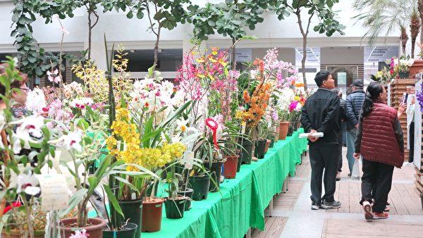 「2017台灣蘭花大展」即日起至3月5日在豐原陽明大樓展出,現場並展示五百多株獨特品種蘭花。(鄧玫玲/大紀元)