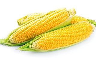 降血压、降血脂、抗衰老 好吃的玉米身价高