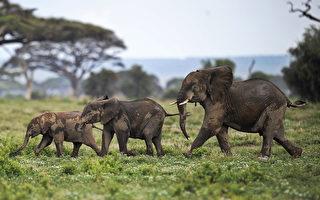 大象日出前习惯打瞌睡补眠 专家这么说