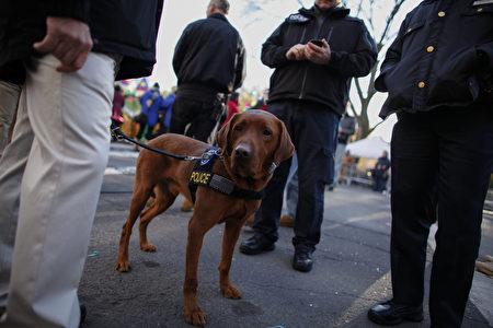 纽约市警察局的警犬,正在执行任务。(Kena Betancur/Getty Images)