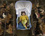 CDC在報告中說,自從十月份以來,H7N9已經感染了460人。(China Photos/Getty Images)
