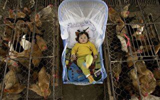 CDC在报告中说,自从十月份以来,H7N9已经感染了460人。(China Photos/Getty Images)