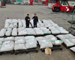 This recent undated photo received on December 28, 2016 shows Shanghai customs officers checking pangolin scales at a port in Shanghai. Chinese customs seized over three tonnes of pangolin scales, state media said, in the country's biggest-ever smuggling case involving the animal parts. / AFP / STR / China OUT        (Photo credit should read STR/AFP/Getty Images)