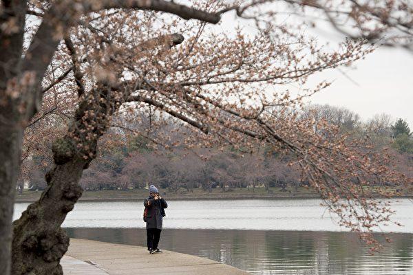 儘管寒冷還在有些人身邊流連,但是春分於週一(3月20日)正式降臨。(SAUL LOEB/AFP/Getty Images)