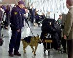 狗儿有敏锐嗅觉,可以被训练侦测五花八门的目标物,包括炸弹、毒品、尸体、逃犯、恐怖分子、害虫、以及癌症等。狗儿有敏锐嗅觉,可以被训练侦测五花八门的目标物,包括炸弹、毒品、尸体、逃犯、恐怖分子、害虫、以及癌症等。(Getty Images Staff)