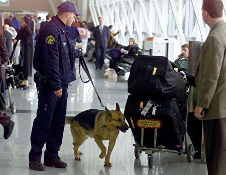 狗兒有敏銳嗅覺,可以被訓練偵測五花八門的目標物,包括炸彈、毒品、屍體、逃犯、恐怖分子、害蟲、以及癌症等。狗兒有敏銳嗅覺,可以被訓練偵測五花八門的目標物,包括炸彈、毒品、屍體、逃犯、恐怖分子、害蟲、以及癌症等。(Getty Images Staff)