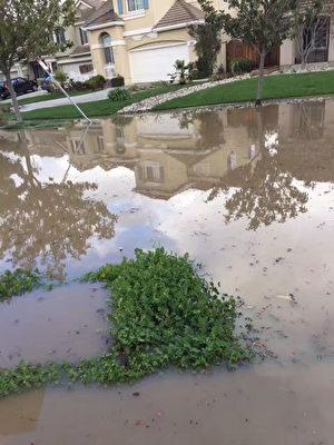 洪水淹没住家前的草地,硅谷保险经纪呼吁购买洪水险。(读者提供)