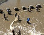 3月22日,旧金山东湾鱼类保护组织将搁浅在阿拉米达溪的虹鳟鱼和太平洋七鳃鳗运送到上游的Niles Canyon。(林骁然/大纪元)
