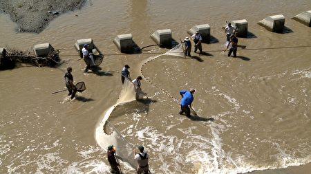 3月22日,舊金山東灣魚類保護組織將擱淺在阿拉米達溪的虹鱒魚和太平洋七鰓鰻運送到上游的Niles Canyon。(林驍然/大紀元)