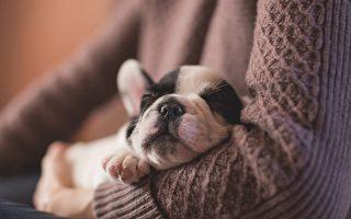 狗狗CPR  饲主不可不知的宠物急救常识