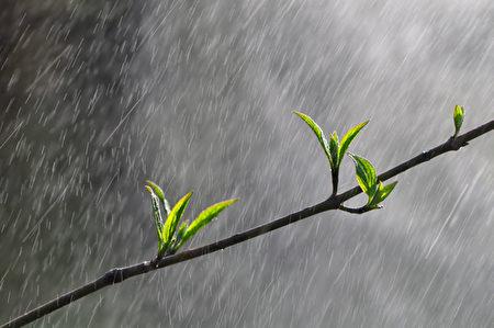 清明会不会起风?清明会不会开始春天之惊雷?可是清明必然是鲜花遍开的季节。(fotolia)