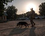 尼日利亚东北部一个村庄的村民举行婚礼,一名炸弹袭击者混入。不过一条狗跳到她身上,引爆了爆炸带。图为尼日利亚士兵与嗅探犬在巡逻。(AFP PHOTO / STEFAN HEUNIS)