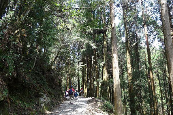 特富野古道,旧铁道与枕木相伴,每隔五百公尺就设一座指标,在杉林中享受森林浴,行程轻松走来也不觉得累。(曾晏均/大纪元)