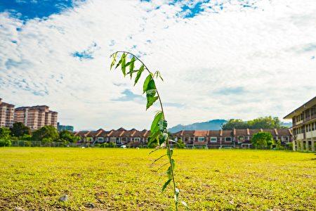学生与义工们发挥了群体精神,在原来的双溪龙小学草场上,另外再多种植五十颗的小树苗,美化校园。(Steven/大纪元)