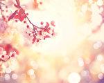 春光明媚的自然风光与粉红色树盛开(fotolia)