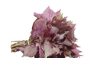 【厨房兼药房】鱼蟹克星的紫苏