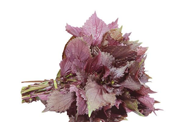 红紫苏(fotolia)