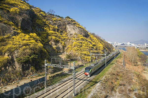 鹰峰山为位于韩国首尔特别市城东区鹰峰洞汉江河畔的小山丘,海拔高度为94米,每年4月迎春花盛开,风景美不胜收。搭乘地铁中央线鹰峰站下车步行10分钟可以登上山顶。图为中央线地铁。(全景林/大纪元)