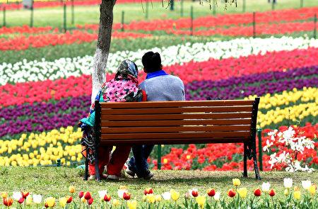 印度英迪拉甘地花园郁金香竞相绽放,姹紫嫣红、热闹非凡!(Tauseef MUSTAFA/AFP)