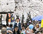 一年一度的韓國首爾汝矣島櫻花節,賞花客人山人海。該慶典將於4月9日結束。(全景林/大紀元)